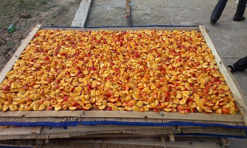 厂家供应全自动海棠果捅核-切瓣机,海棠果干加工设备