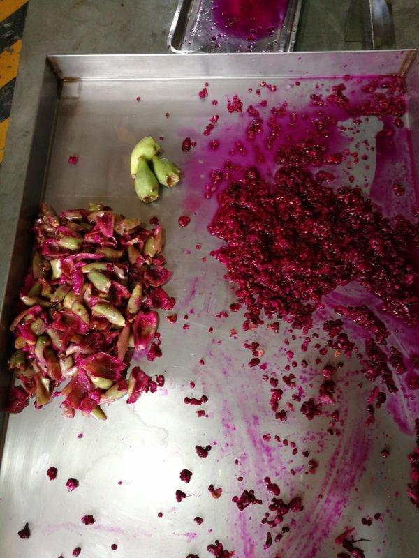 厂家供应仙人掌果皮籽分离机,仙人掌果剥皮分离加工设备